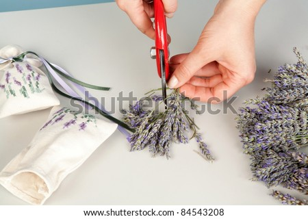 Lavender on a white background with female hands