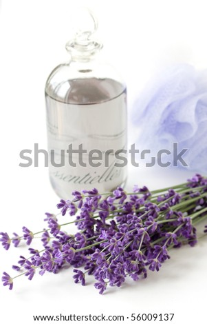 lavender plant and oil