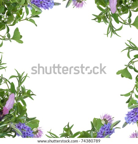 Lavender, thyme and chive flowers with rosemary and lemon balm herb leaf forming an abstract border, isolated over white background.