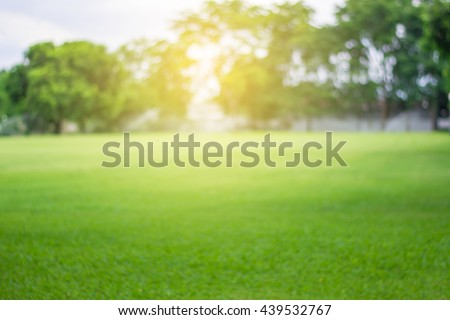 Lawn blur with soft light for background Сток-фото ©