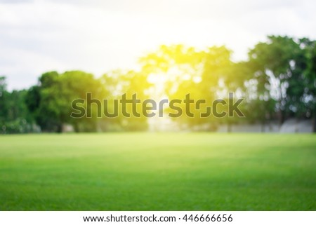 Lawn blur with soft light for background - Shutterstock ID 446666656