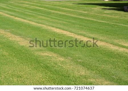 Lawn care #721074637
