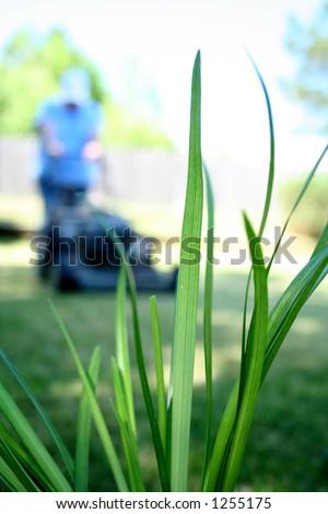 Lawn Garden Grass Mowing