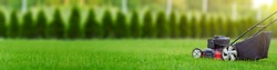 Lawn mower cutting green grass in backyard, mowing lawn, green thuja trees on background with copy space