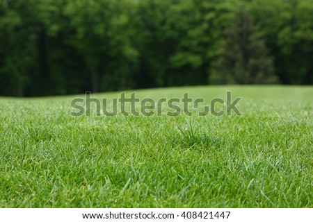Lawn with green grass. Field of grass and background of line trees at a defocus.