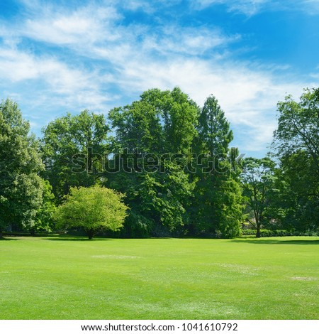 Lawn with green grass in summer park