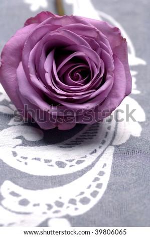 Lay down macro of pink rose