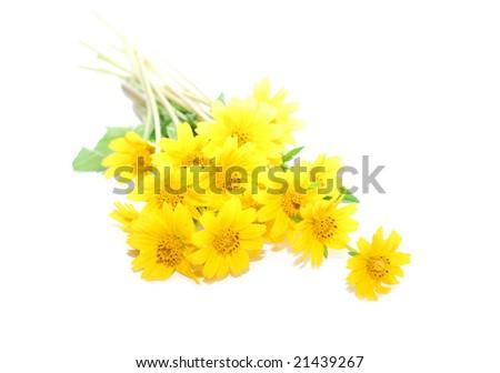 lay down tiny yellow daisies