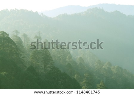 Layer of green forest and mountain range in the mist. View from Dochula Pass on the road from Thimphu to Punaka, Bhutan