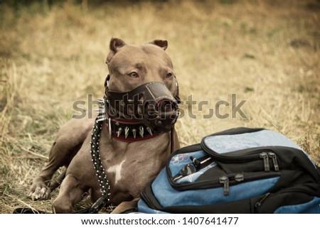 Laying on the grass and backpack protects the owner of a large pedigree dog.     #1407641477