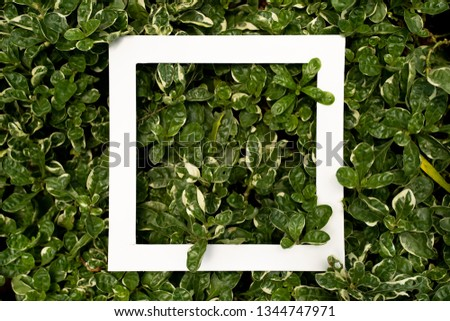 layout made of flowers and leaves with white paper copyspace area #1344747971