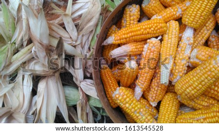 layout of corns and the leaves of corns