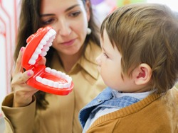 layout of the human jaw. Jaw toy. Layout to demonstrate the jaw to dental students. mom shows the jaw to the child.