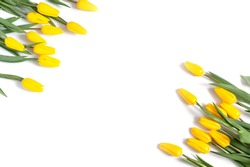 layout of yellow tulips on a white background