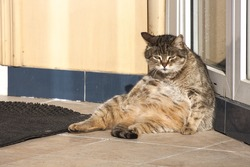 Lazy cat basking in the sun on the street. Fat cat.