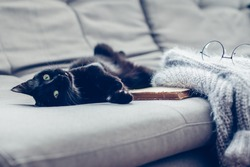 Lazy cat lying by warm woolen sweater and book on gray sofa. Winter or autumn cozy scene.