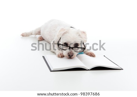 Dog Wearing Reading Glasses Lazy Dog Wearing Reading