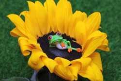 Lazy frog lying in a large sunflower. The concept of idleness, boredom and melancholia.