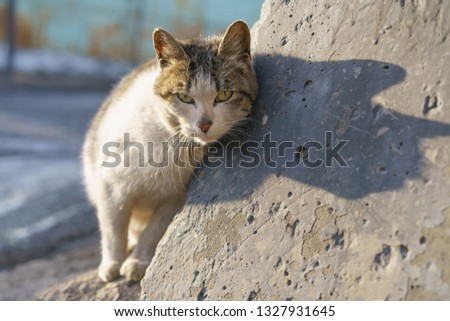 Lazy homeless cat basking and rubbing against the stone #1327931645