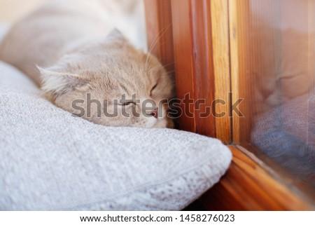 Lazy lovely fluffy cat lying near the window on the pillow. Beige tabby cute kitten sleeping on window sill. Friend of human. Animal lover.