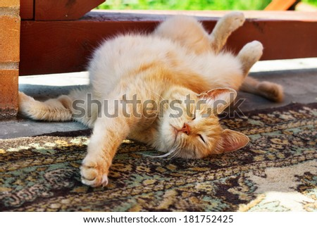 lazy red cat scratching himself