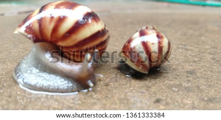 lCaramujo, cornetinha [1] or burrié is a mollusc aquatic gastropod. It has the spiral shell, with the turns or turns in the same plane, receiving, therefore, the denomination of planorbídeo. #1361333384
