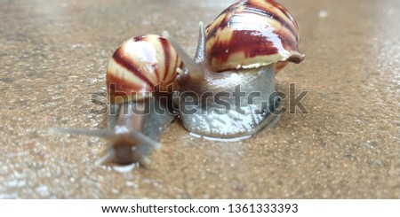 lCaramujo, cornetinha [1] or burrié is a mollusc aquatic gastropod. It has the spiral shell, with the turns or turns in the same plane, receiving, therefore, the denomination of planorbídeo. #1361333393