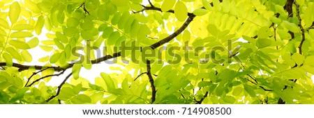 leaf #714908500