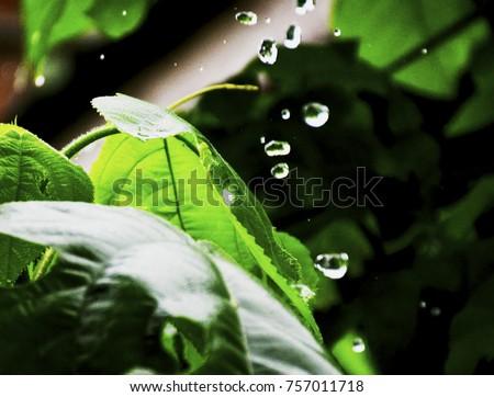 leaf and drop rain in dark background #757011718