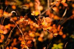 leaf and tree in Autum season in beautiful goldenhour light