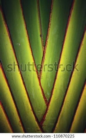 Leaf arrangement, close-up