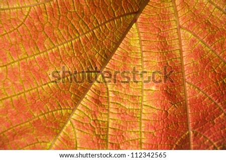 leaf autumn background.