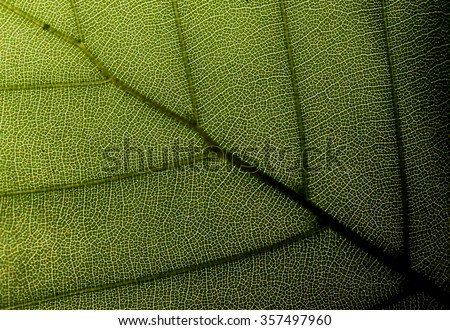 Leaf background #357497960