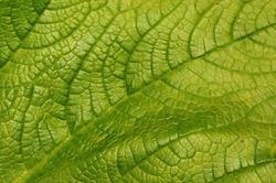 Leaf Background Leaf Textures Gree Leafs