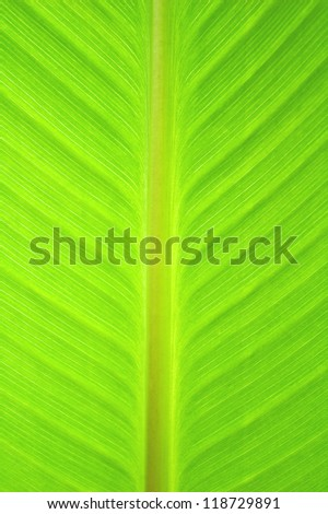 Leaf background texture