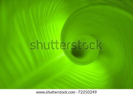 leaf close up in spiral shape
