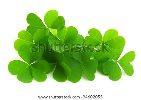 leaf clover isolated on white