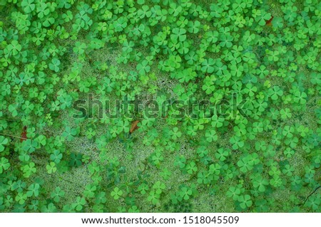 leaf clover , Lucky leaf , Four Leaf Clover #1518045509