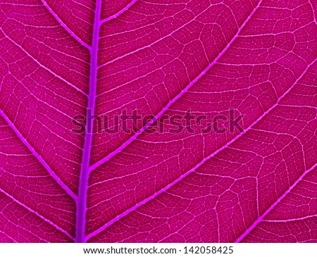 Leaf color. Isolated with a  background - Shutterstock ID 142058425