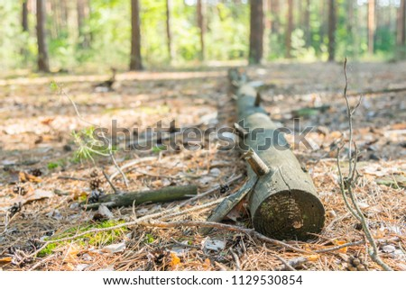 Leaf Covered Path in Forest with Fallen Logs. a fallen tree in the woods #1129530854
