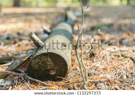 Leaf Covered Path in Forest with Fallen Logs. a fallen tree in the woods #1132297373