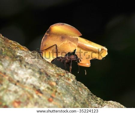 leaf cutter ant carrying piece of leaf, costa rica 6