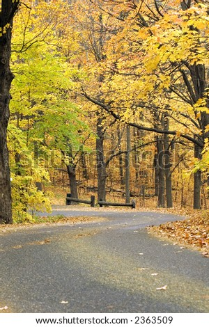 Leaf dusted road with autumn canopy