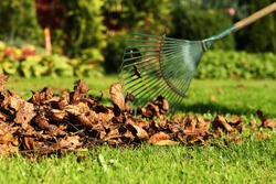 Leaf fall and removal in autumn, rake leaves on a meadow with rakes in the garden