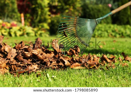 Leaf fall and removal in autumn, rake leaves on a meadow with rakes in the garden Stock photo ©