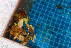 Leaf falling in the swimming pool and made it dirty.