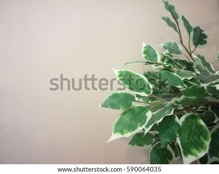 Leaf Frame #590064035
