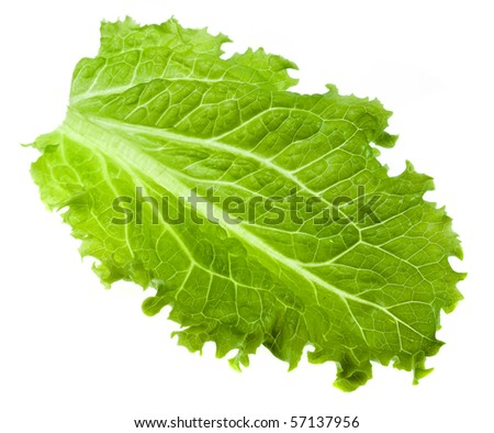 leaf fresh lettuce isolated on white background