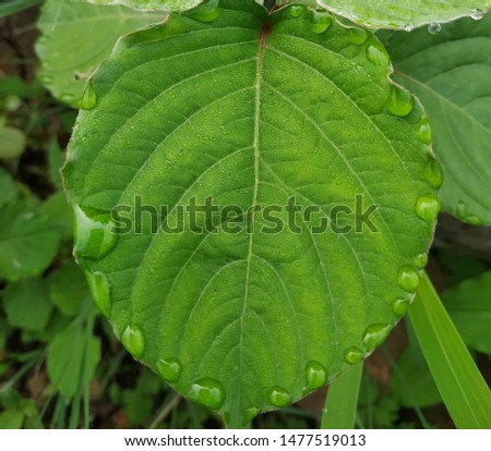 Leaf green leaf focus leaf best leaf  #1477519013