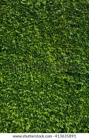 Leaf green vertical texture, plants #413635891